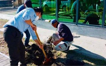 Төв аймаг дахь Улсын бүртгэлийн хэлтсийн хамт олон өнөөдөр 108ш мод тарилаа