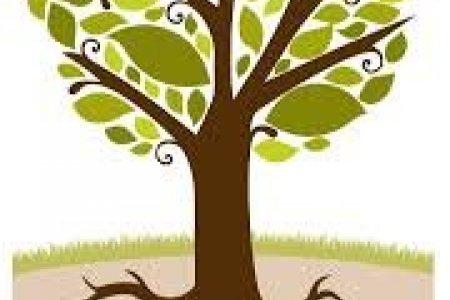 8 түмэн мод